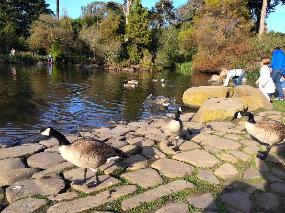 duck-splash